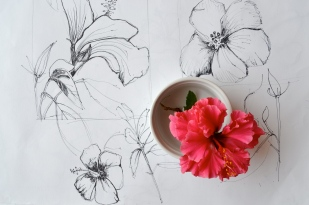 Drawing of the flower.